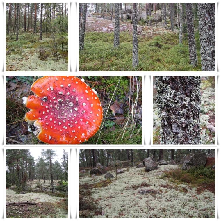 Schweden Wald_curl05a